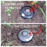 Termite Baiting System