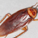 img_cockroach
